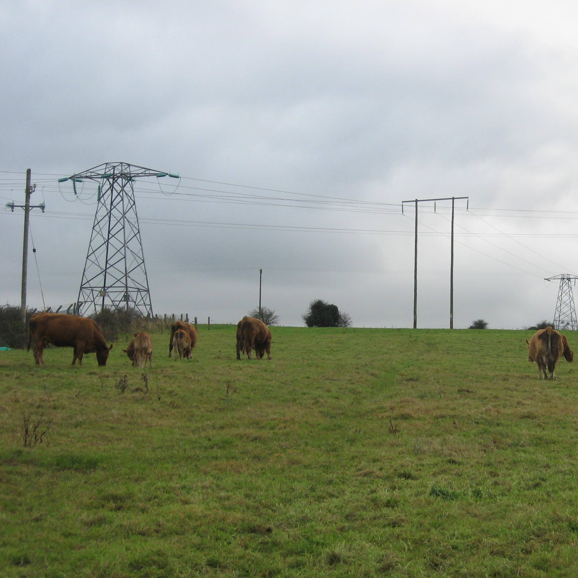 Image showing electricity pylons during field walking